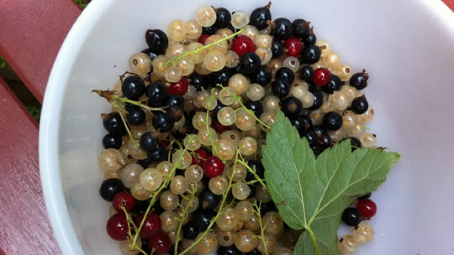 Bunte Beerenmischung - auch die Blätter dazu sind essbar!