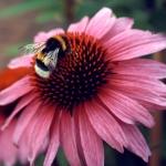 Bienen & Honig