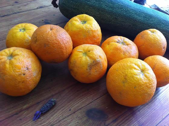 Geschenke eines freundlichen Nachbarn: Orangen und eine Riesen-Zucchini