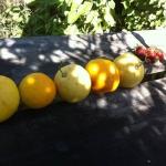 Orangenschalen sinnvoll nutzen