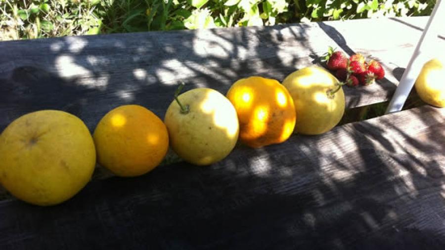 pt-naranjas-mesa