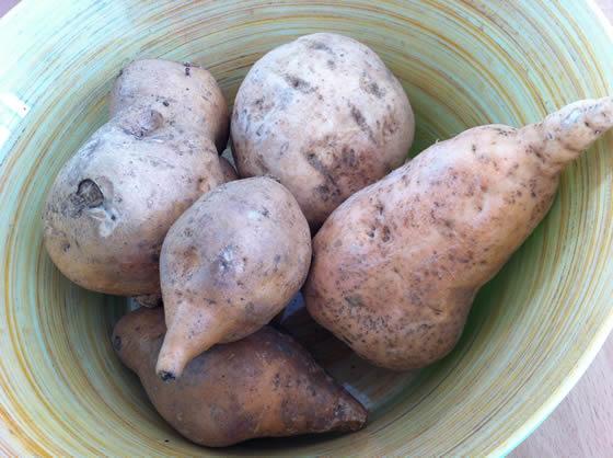 Weiße und orangene Batatas