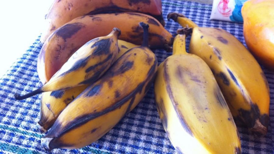 3 von 1000 Bananensorten