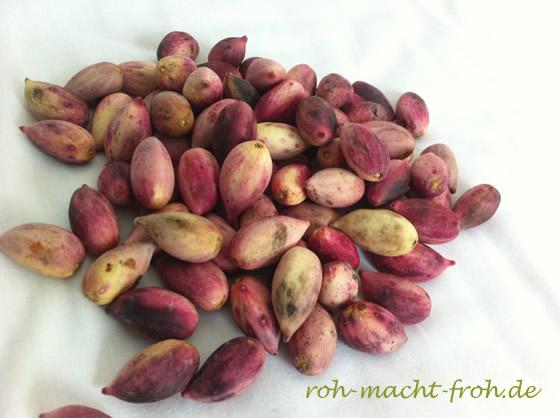 So sehen die frischen Früchte des Pistazienbaums aus