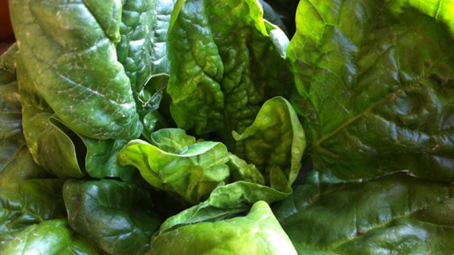 Frühstück: Spinat
