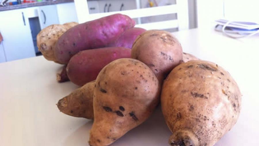 13-batatas