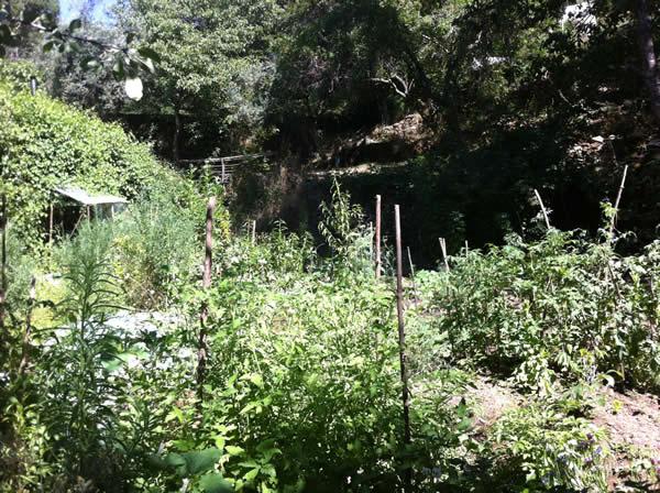 Ein Permakultur-Selbstversorger-Garten