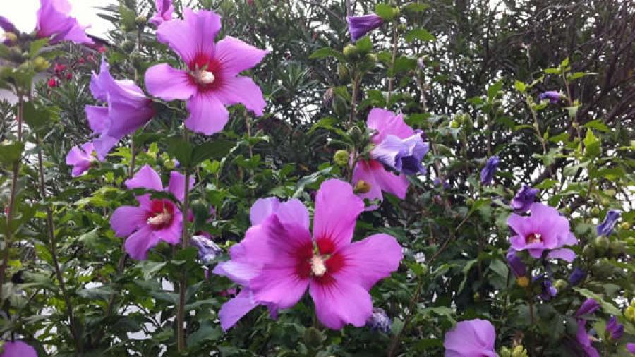 Blumen am Wegesrand in Hendaye