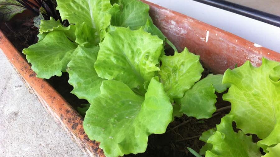 13-salat