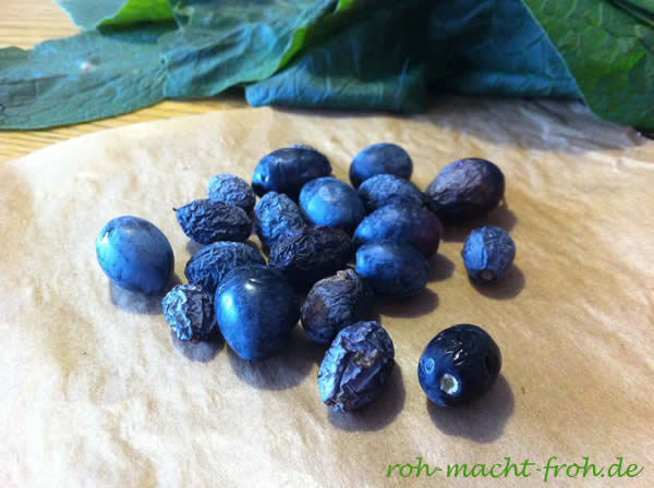 Erste gesammelte Oliven