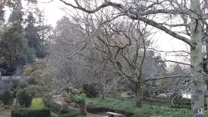 Winterschönheit im Botanico