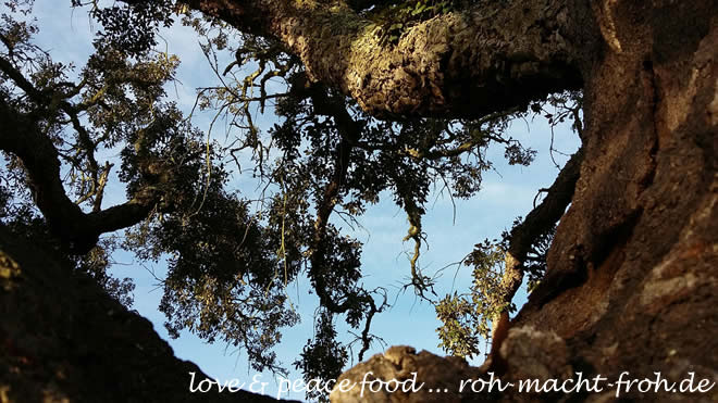 Magische Bäume