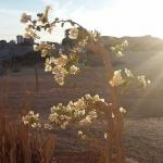 Reise-Impressionen & Wissenswertes: Ägypten