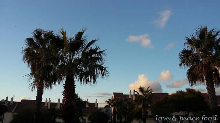 Tarifa. Palmen. Sonne. Blauer Himmel.