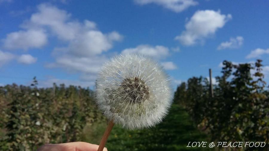 blog-1116-minimalismus-freiheit