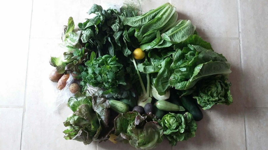 food-1115-greens