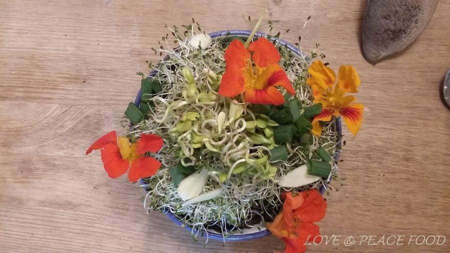 food-190201-algen-sprossen-bowl