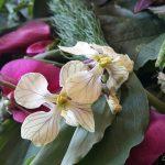 Perfekte, wunderschöne, opulente Natur: Wildkräuterwandern im Frühling