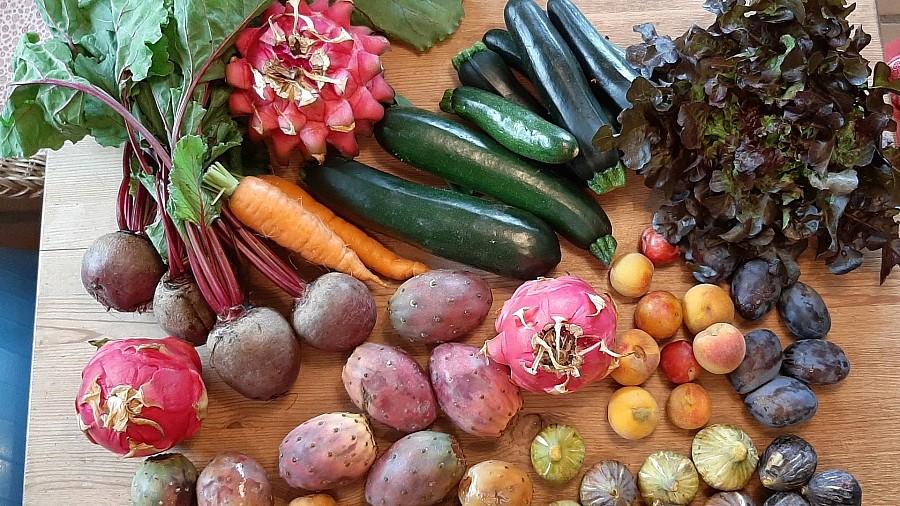Roh veganer Wocheneinkauf auf dem Bauernmarkt - Happy Healthy Raw & Free
