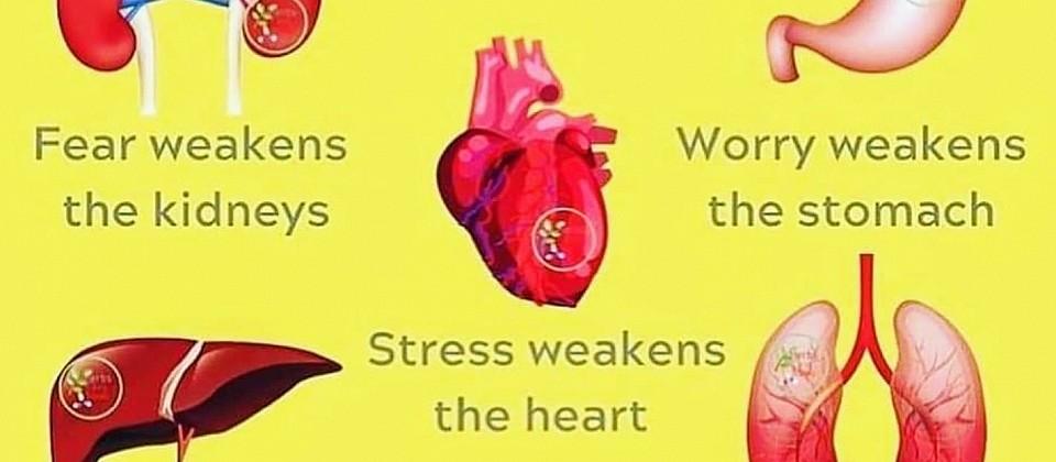 Zusammenhang Emotionen - Organprobleme